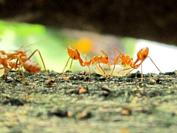 Ant_Antibiotics_Feb7